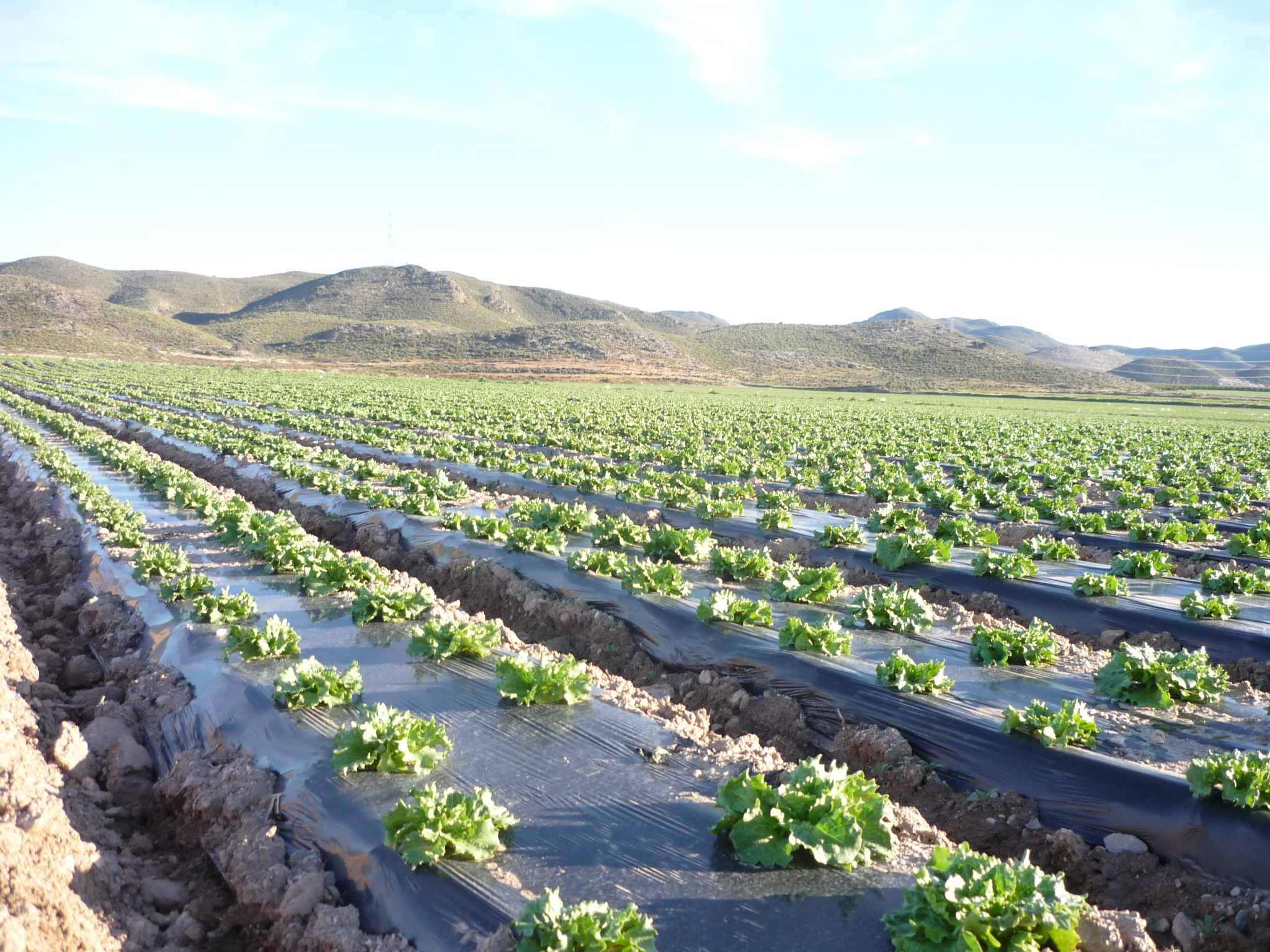 New Eu Standard For Biodegradable Mulch Films In Agriculture
