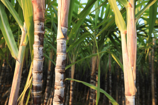 The Corbion case: a multi-stakeholder initiative driving sustainability in the cane sugar sector in Thailand
